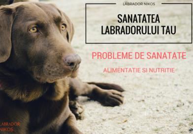 Ingrijirea Labradorului tau – Ghid Despre Ingrijire