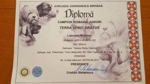 Asociatia Chinologica Romana - Diploma Campion Junior Romania - Terra Spirit Aratus - Terra Spirit Happy Nikos