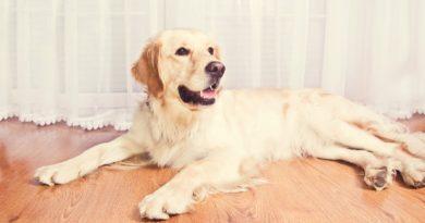Vaccinul la caini - Infectii, intoxicatii si tratamente naturale
